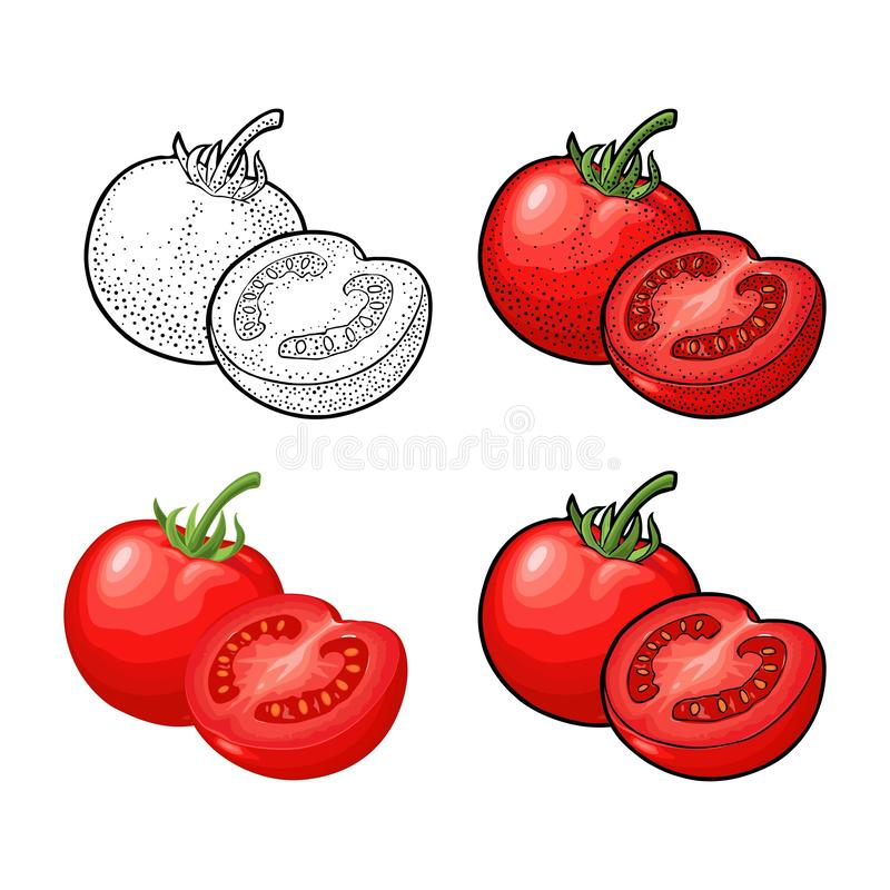 Whole and half tomatoes. Vector vintage engraving and flat illustration. vector illustration