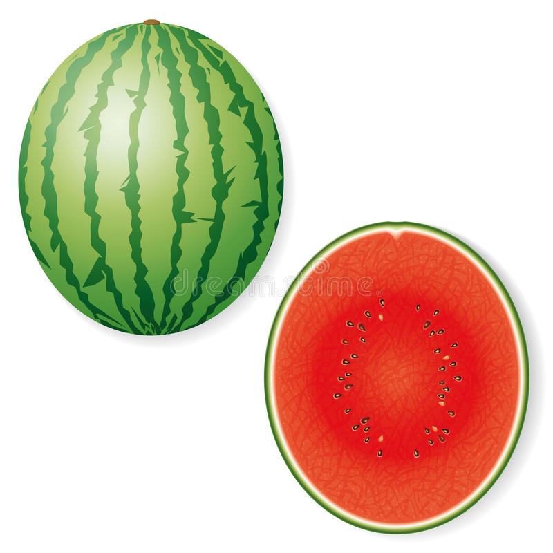 Whole and Halved Watermelon Fruit Vector Icon stock illustration
