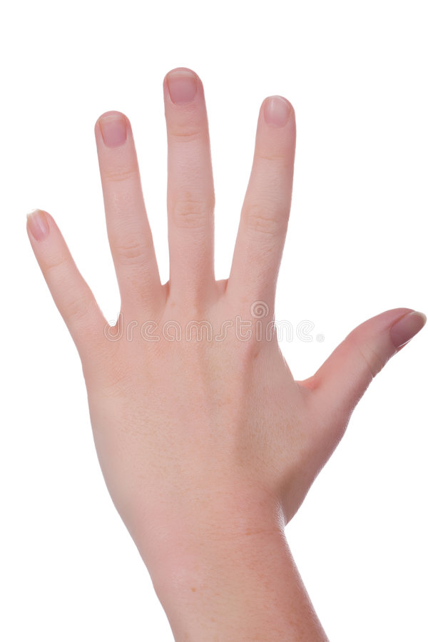 The Whole Hand Stock Image  Image Of Handsign  White  Word