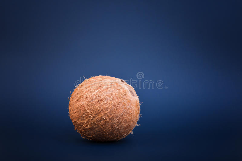 Whole hawaiian coconut, on a dark blue background, close-up. Fresh, whole and bright brown coconut. Healthy coconuts. royalty free stock photo