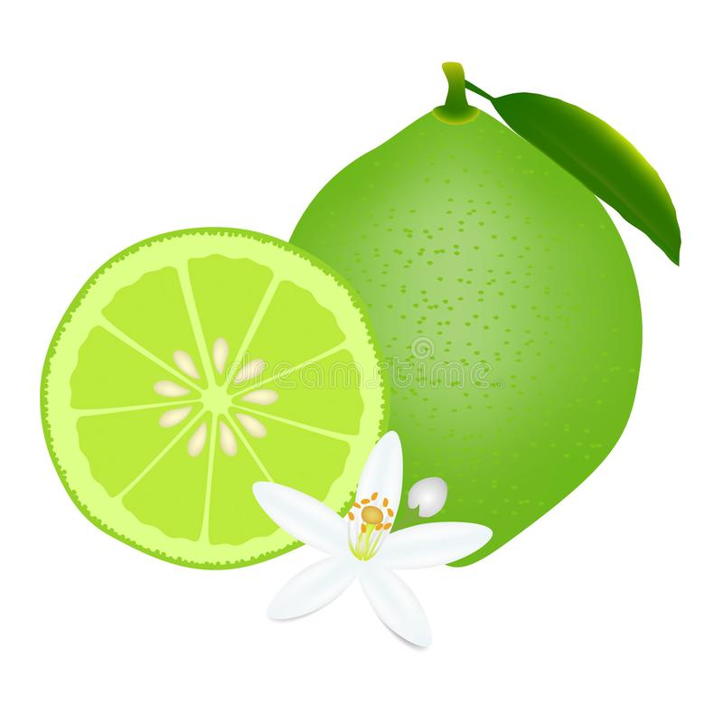 Whole lime and half with flowers isolated on white background. vector illustration