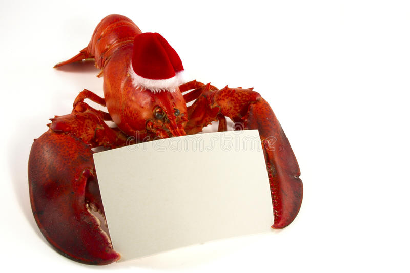 Whole Lobster with Santa Hat royalty free stock photography