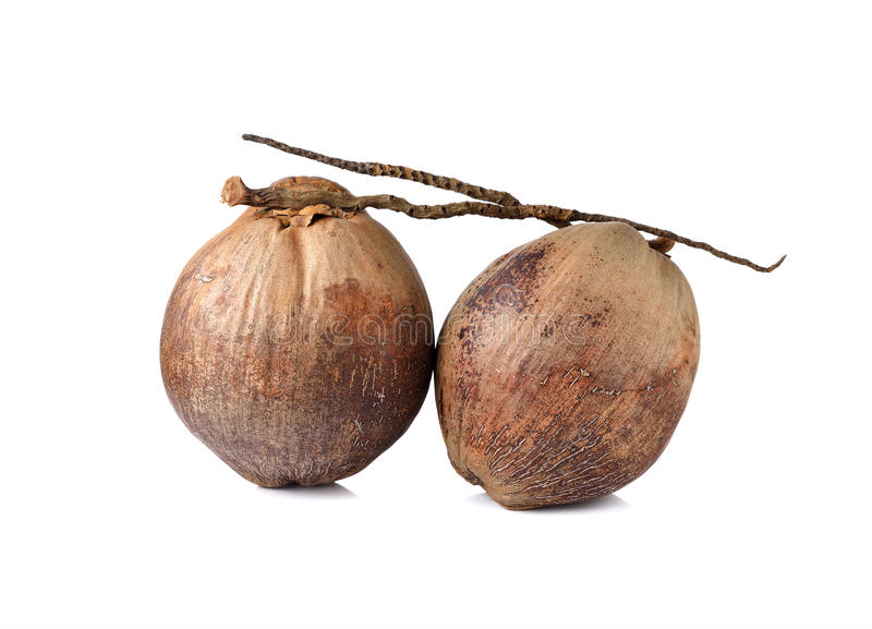 Whole mature coconut with stem on white. Background stock photo