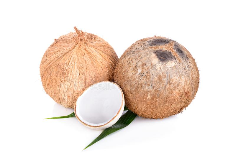 Whole mature and half cut young coconut with leaf on white backg. Whole mature and half cut young coconut with leaf on a white background stock photo