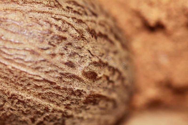 Whole nutmeg closeup stock image
