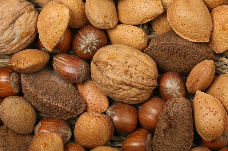 Whole nuts closeup royalty free stock photos