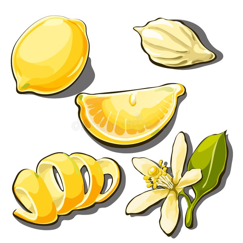 Whole ripe yellow lemon. Peel, slice, seed and flower of lemon isolated on a white background. Vector cartoon close-up vector illustration