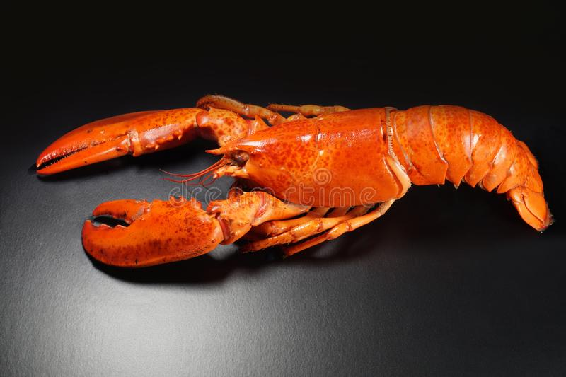 Fresh american lobster, whole silhouette on a dark background royalty free stock photo