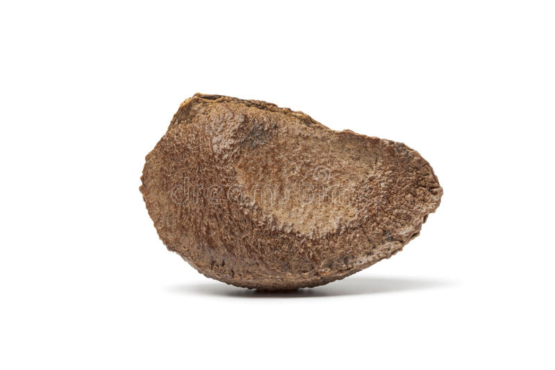 Download Whole Single Fresh Brazil Nut Stock Image - Image: 23593307