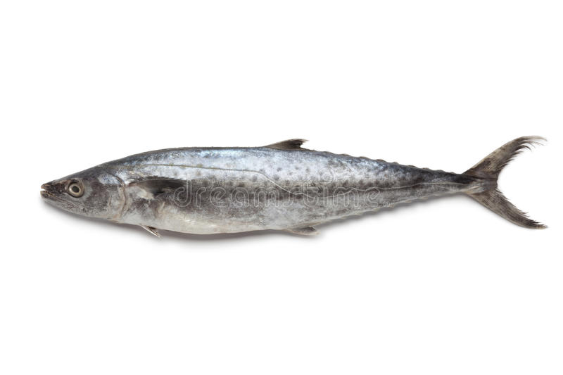 Download Whole single Kingfish stock image. Image of seafood, food - 25377003