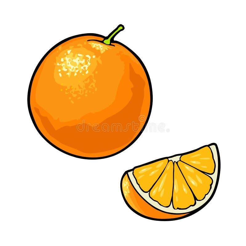 Whole and slice orange. Vector color vintage royalty free illustration
