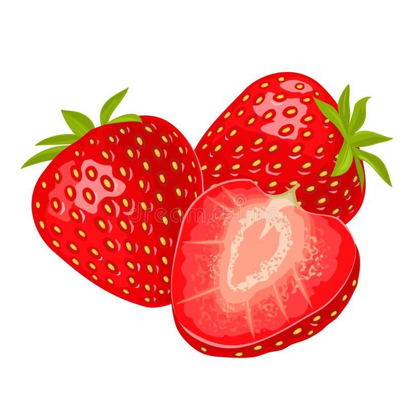 Whole and slice strawberry. Vector color flat illustration. For menu, poster. Isolated on white background vector illustration