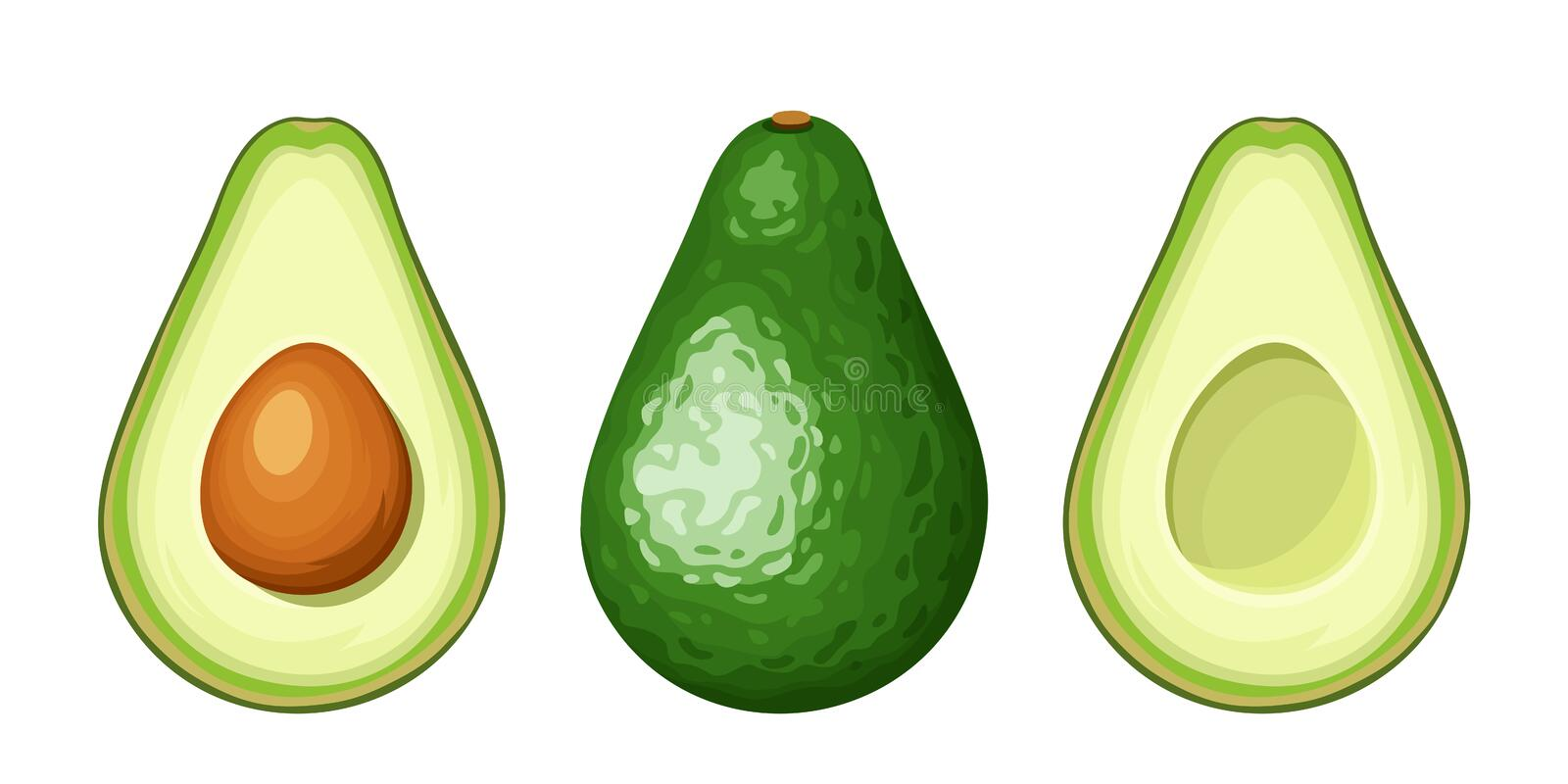 Whole and sliced avocado fruit. Vector illustration. Vector set of whole and sliced avocado fruit isolated on a white background vector illustration
