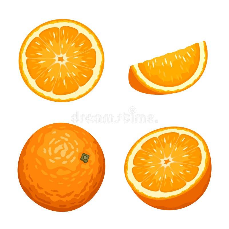 Whole and sliced orange fruits isolated on white. Vector illustration. royalty free illustration