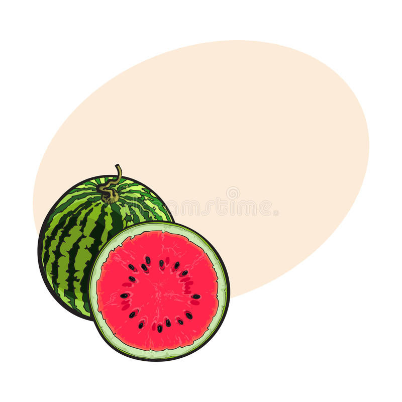 Whole striped watermelon and cut in half, sketch illustration stock illustration