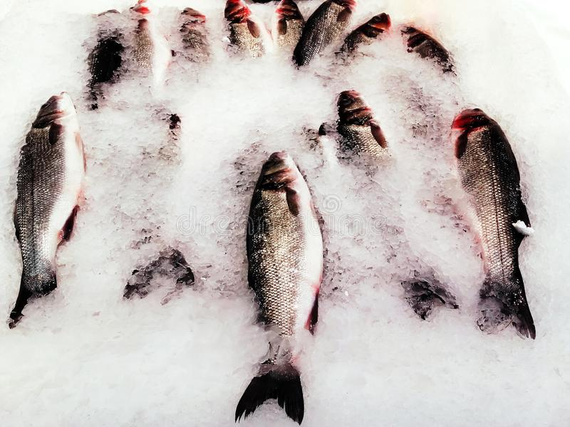 Whole trout  in the ice, ready for sale at fish market royalty free stock photos