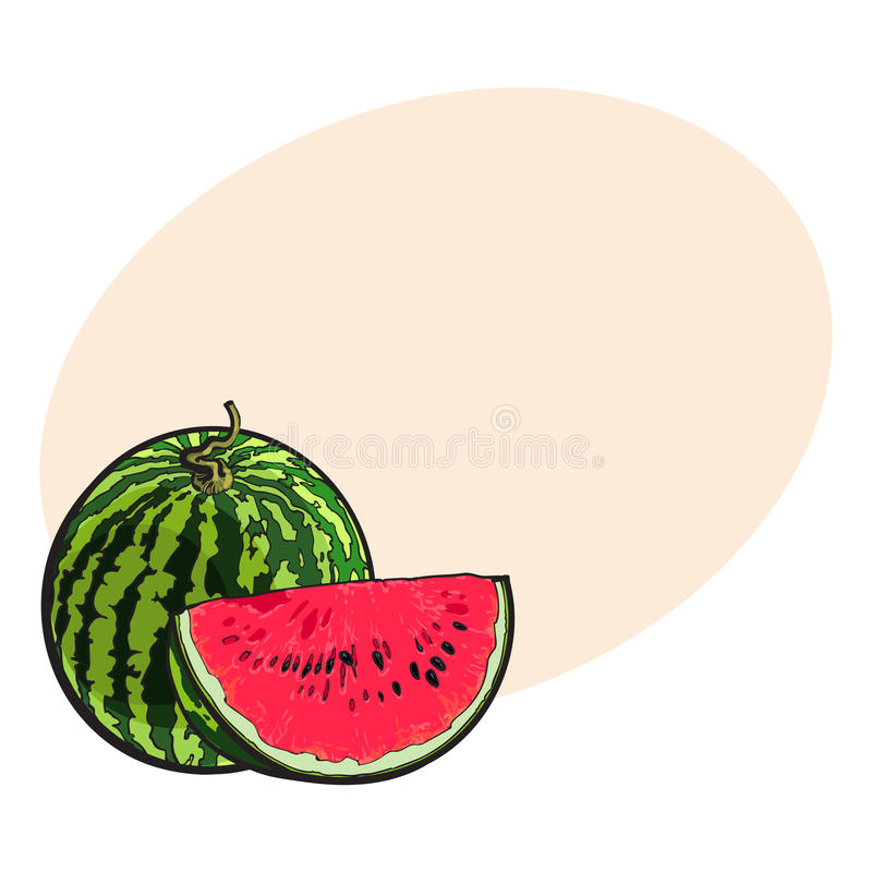 Whole watermelon and red slice with black seeds, sketch illustration royalty free illustration