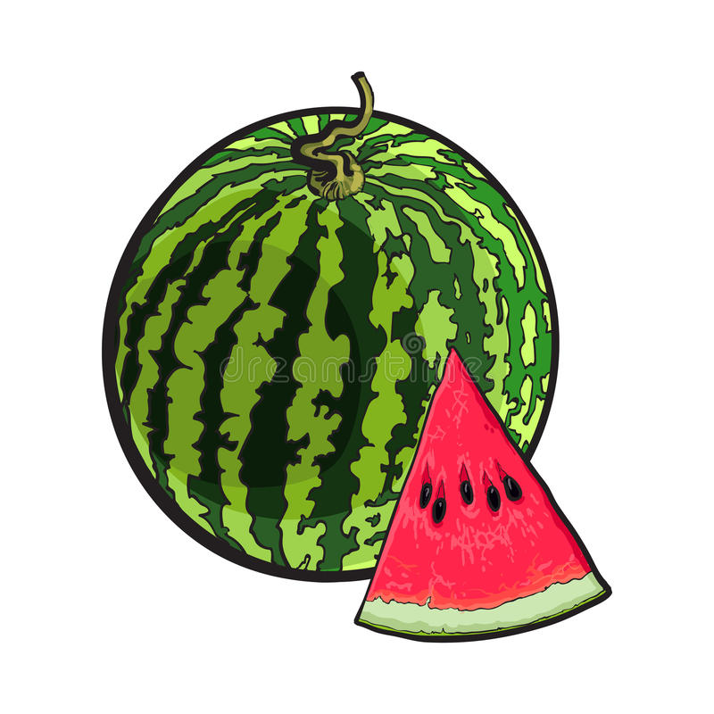 Whole watermelon and red triangular piece with seeds, sketch illustration stock illustration