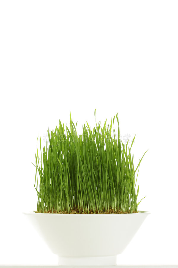 Whole Wheatgrass Royalty Free Stock Image