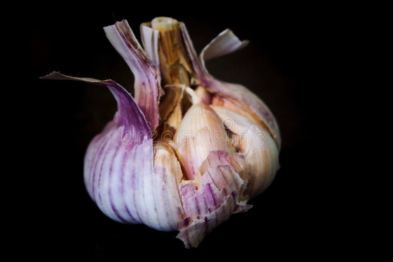 A whole white garlic. A half opened garlic in black background stock photography