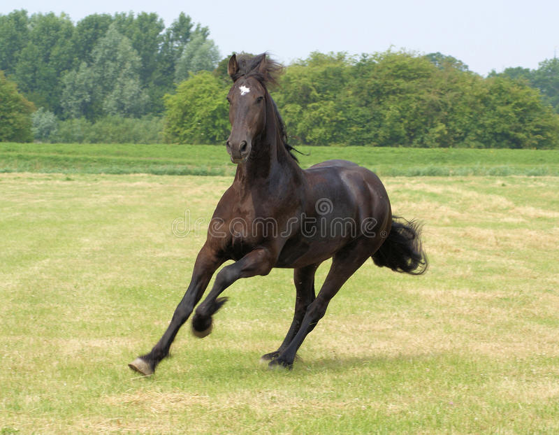 Download Whoooooo imagem de stock. Imagem de netherlands, animal - 10051453
