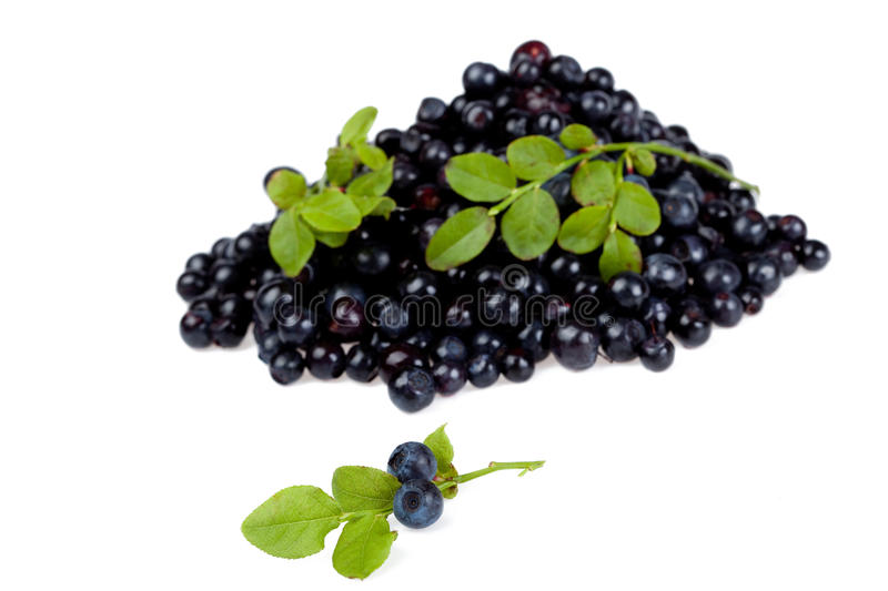 Download Whortleberry stock photo. Image of image, blue, ingredient - 14857798