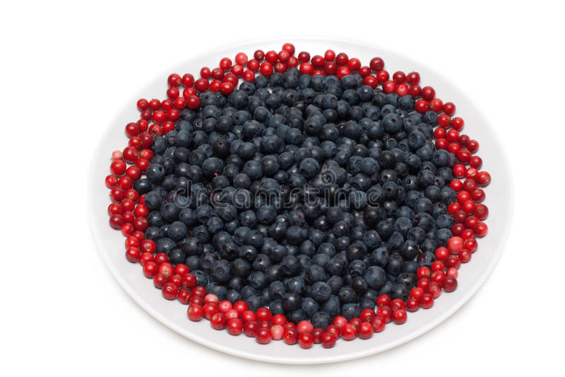 whortleberry cowberries ягод стоковое изображение