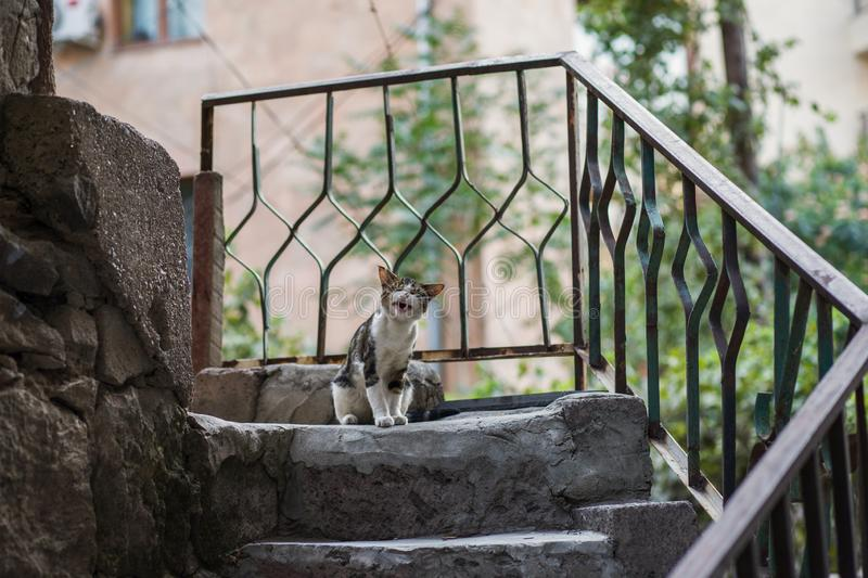Why my life sucks! Funny stray cat try to cry. 2018 new photo, cute street cat try to cry, very funny stock photo
