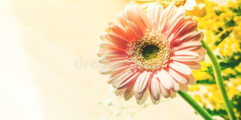 Wiązka piękny kwiatu gerbera zbliżenie obrazy royalty free