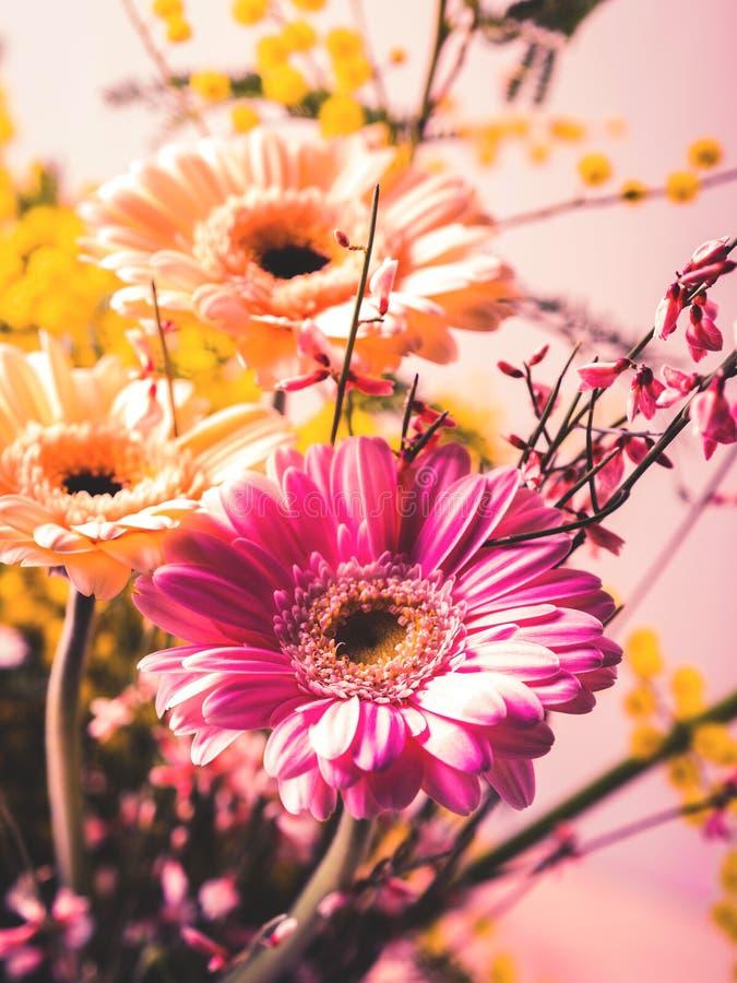 Wiązka piękny kwiatu gerbera zbliżenie obrazy stock