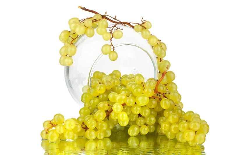 Wiązki zieleni winogrona w szklanej round wazie na bielu lustra tle z odbiciem i wodne krople odizolowywającym zakończeniu w górę obrazy royalty free