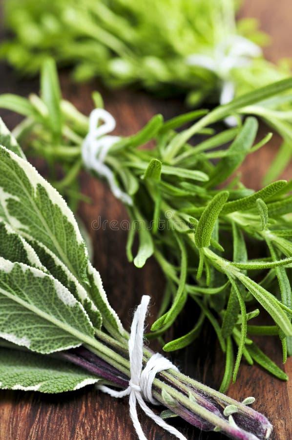 wiązek świeże zioła zdjęcia stock