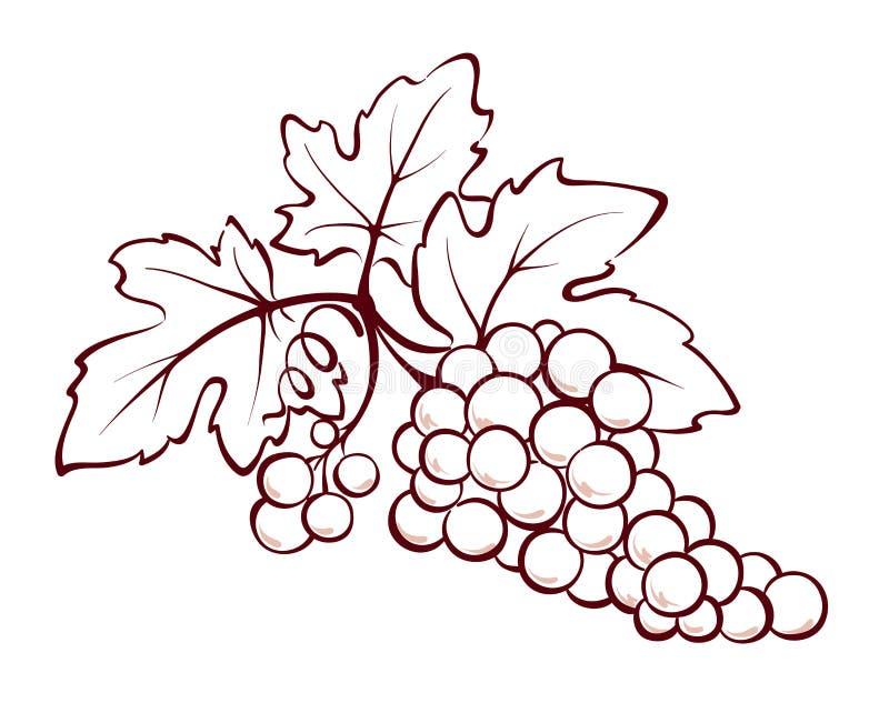 wiązek winogrona