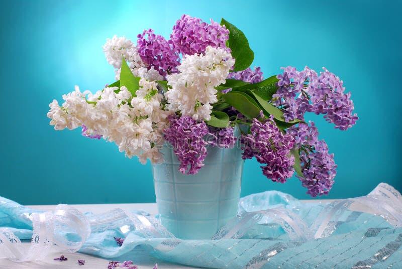 Wiązka świeży biały i purpurowy bez obraz stock