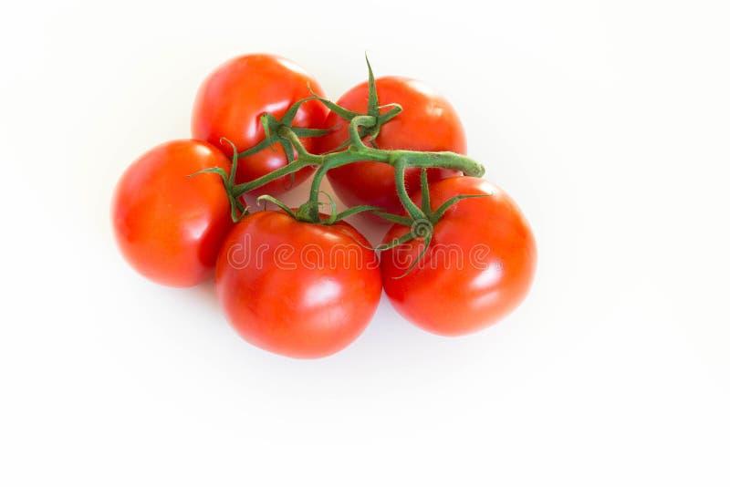Wiązka świezi pomidory na gałązce nad białym tłem, fotografia royalty free