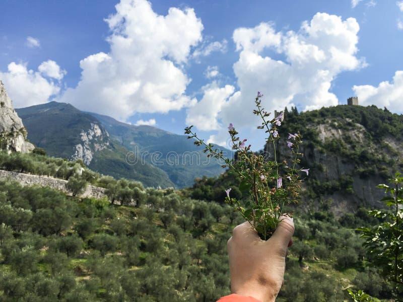 Wiązka Alpejska mennica Włochy zdjęcia stock