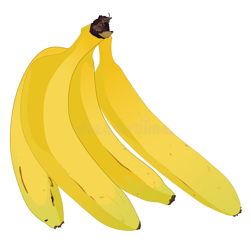 Wiązka banany royalty ilustracja