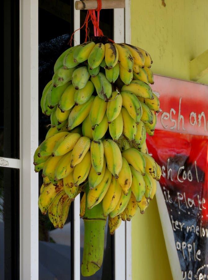 Wiązka banany przy zwrotnika morzem fotografia royalty free