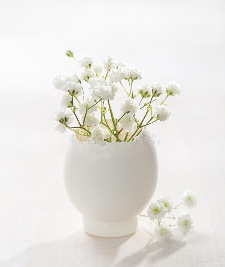 Wiązka białego dziecka oddech kwitnie łyszczec w jajecznej skorupie na białej drewnianej desce Płytka głębia pole, ostrość na pob zdjęcia royalty free