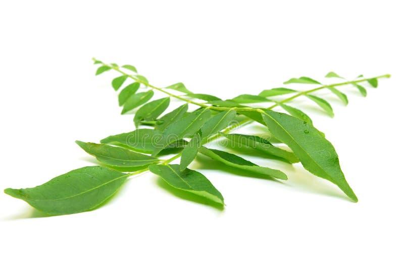 Wiązka currych liście zdjęcia stock