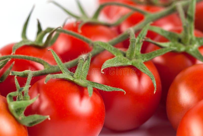 Wiązka czerwoni smakowici świezi pomidory na białym tle obrazy royalty free