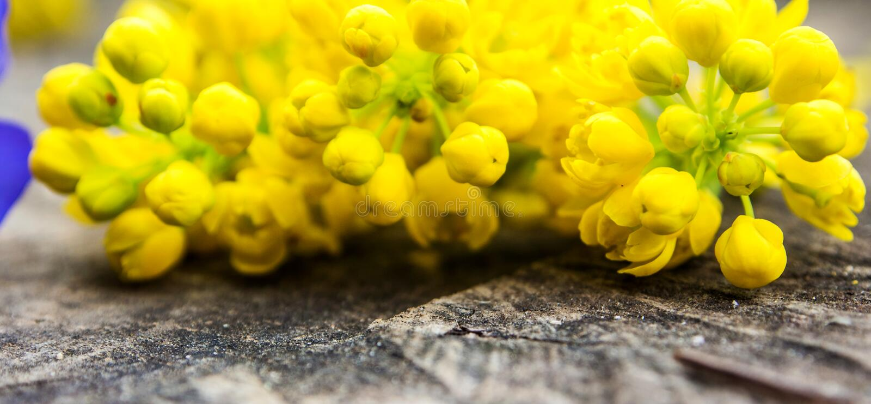 Wiązka fiołek i kolor żółty kwitnie z zielonym liściem zdjęcie stock