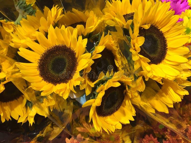 Wiązka jaskrawi słoneczniki sprzedający przy rynkiem obraz royalty free