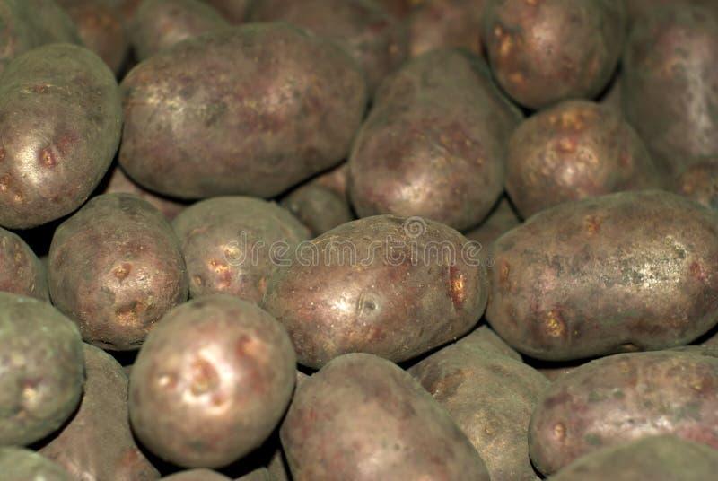 Wiązka kartoflany bulwy zbliżenie fotografia stock