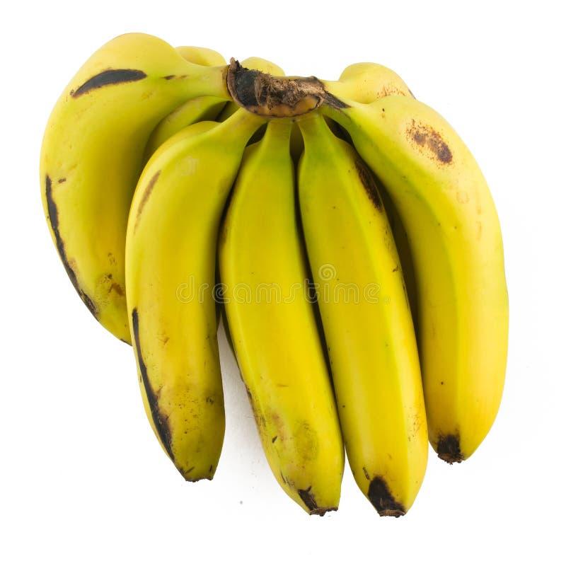 Wiązka Nanica banan zdjęcie stock