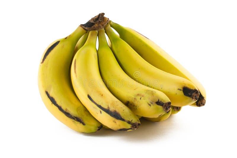 Wiązka Nanica banan fotografia stock