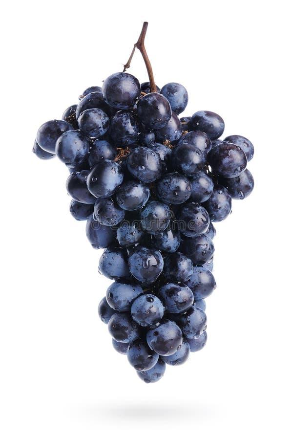 wiązka opuszcza winogrona odizolowywającą wodę obraz stock
