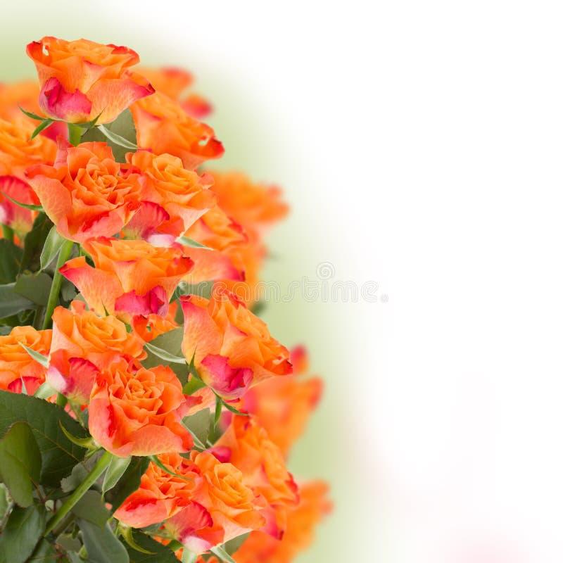 Wiązka pomarańczowe róże fotografia stock