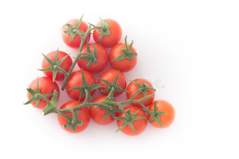 Wiązka pomidory na gałązce, białym tle/ zdjęcia royalty free