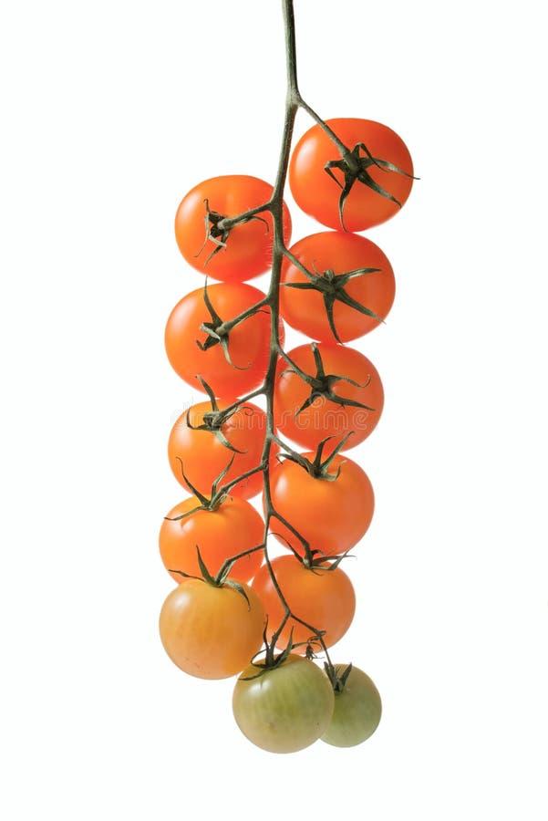 Wiązka pomidory na sprig zdjęcia royalty free